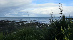 New Zealand Kaka Point flowers and tide pools Stock Footage