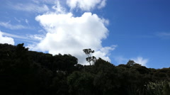 New Zealand Catlins cloud over Podocarp forest Stock Footage