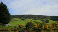 New Zealand Catlins hills and pasture Stock Footage