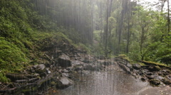 View  from behind a waterfall In humid cloud forest Stock Footage