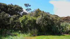 New Zealand Catlins podocarp forest Stock Footage