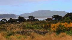 New Zealand Waikawa Bay grass and shrubs in rain Stock Footage
