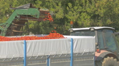 Tomato harvesting machinery in action. Arkistovideo