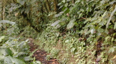 Walking along a path through montane rainforest in fast motion. Stock Footage