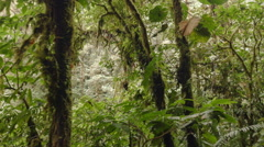 Tracking past  lush  green montane rainforest vegetation with mossy branches and Stock Footage