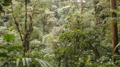Tracking through humid montane rainforest  Stock Footage