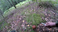 Man found boletus mushroom in the forest Stock Footage