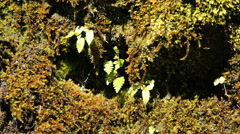 New Zealand Fiordland fern and moss Stock Footage