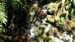 New Zealand Fiordland National Park tiny stream Stock Footage