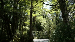 New Zealand Rainforest with flying bugs Fiordland Stock Footage
