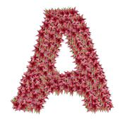 Letter A made from bromeliad flowers isolated on white background Stock Photos