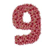 Number 9 made from bromeliad flowers isolated on white background with clippi Stock Photos
