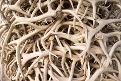 Ivory Pile Elk Antlers Animal Horns Art Installation Stock Photos