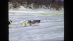 1956: Winter sled dog racing iditarod snow covered sporting event. ANCHORAGE, Stock Footage