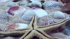 Starfish and Seashells on Sand Stock Footage