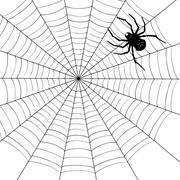 Spider illustration Stock Illustration