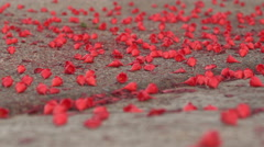 Flower petals falling on concrete, romance background Stock Footage