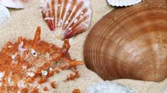 Seashells on Sand Stock Footage