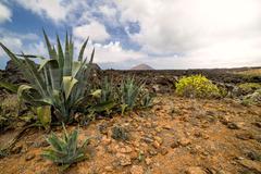 Vulcanic timanfaya Stock Photos