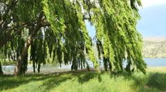 New Zealand Lake Dunstan willows Stock Footage