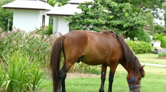 Brown and gray horse is grazing grass in the park Stock Footage