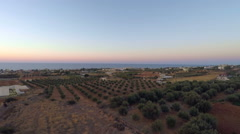 Field with olives, Greece. Crete. Video footage aerial view. Stock Footage