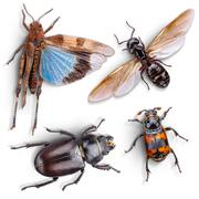 Wild animal insect Stock Photos
