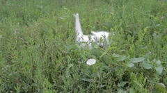 Adorable white kitten on the lawn Stock Footage