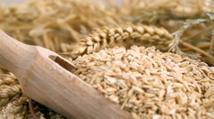 Oatmeal for the diet. Useful and tasty oat groats Stock Footage