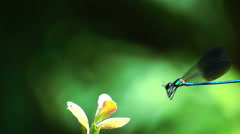 Dragonfly collide with flower Stock Footage