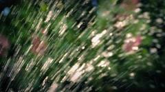 Sprinkler In Garden Closeup Stock Footage