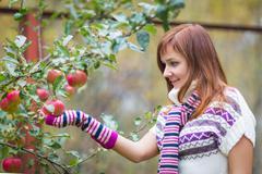 Pretty woman with autumn apple crop near tree Stock Photos