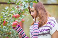 Pretty woman with autumn apple crop near tree Stock Photos