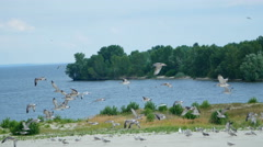 Flock of gulls on the river Stock Footage