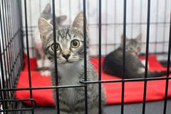 Little kittens in a cage Stock Photos