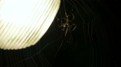 A big spider at the night Stock Footage