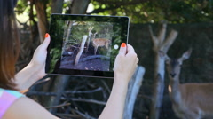 Beautiful girl makes video on the tablet of deer in zoo Stock Footage