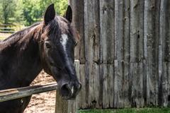 Large horse outside the barn Kuvituskuvat