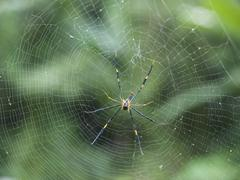 Tropical Black and Yellow Spider in Web Stock Photos