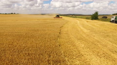 Aerial view of combine harvester gathers the golden wheat crop on farmland in 4K Stock Footage