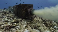 Ocean sewerage discharge Stock Footage