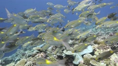 Fish in clear water stable footage Stock Footage