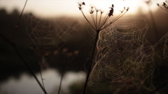 Spider's web morning dawn river Stock Footage