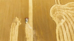 Aerial view of combine working in the wheat field on farmland in 4K Stock Footage