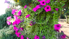 Flowers in the wind Stock Footage