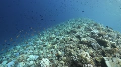 Wide reef many fish Stock Footage