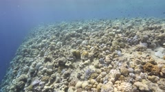 Thousands of fish swarming over reef wide Stock Footage