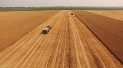 Aerial view of powerful combine reaps wheat. 4k Stock Footage
