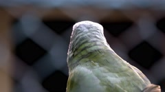 Parrot bird sitting on the perch Stock Footage
