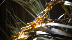 Locusts and vegetation Stock Footage